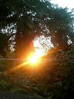 森の逆光線