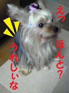 PA0_0085.jpg