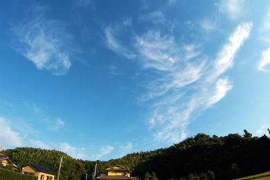 龍雲の全身