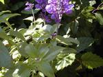 紫の細かい花