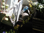 06/23石の鳥