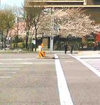 03/28お寺の桜