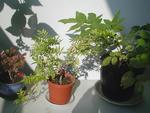 09/25午後の植物