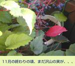 12/20紫の実
