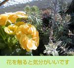 02/02セダムと黄色い花