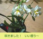02/08水仙