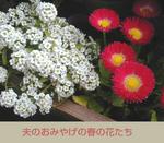 02/20白と赤の花
