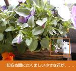 03/05小さな花