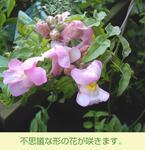 03/17花