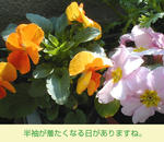 04/19オレンジ