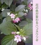 05/17箱根空木