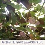 05/31桑の実