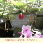 06/03いちご