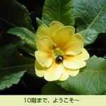 06/15小さな客様
