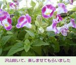 06/30ピンク花