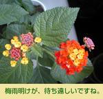 07/17 花