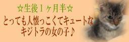 eringisatooya.jpg