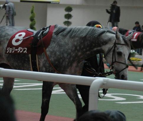 ジョリーダンス@阪神カップ'08