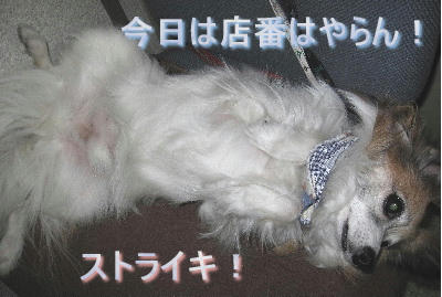 blog63.JPG