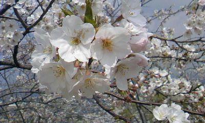 April.11_2.jpg