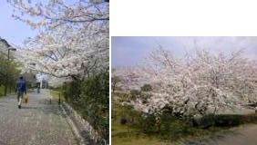 April.11_6.jpg