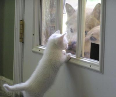 窓越しの挨拶