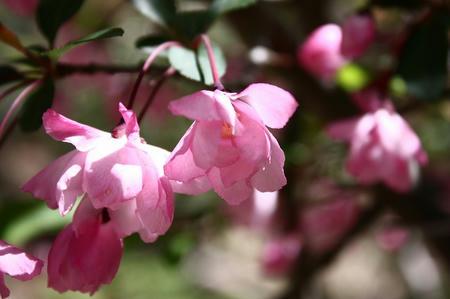 山野草のエキの花