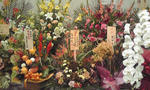 京橋花月 花