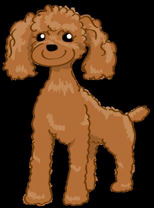 犬 トイプー 絵 イラスト