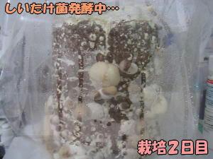 kinoko2_1.jpg
