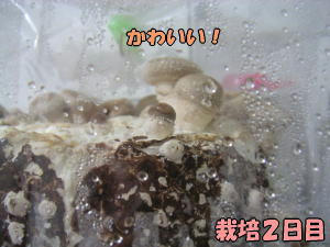 kinoko2_2.jpg