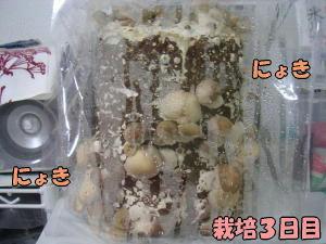 kinoko3_1.jpg