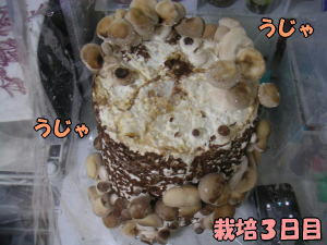 kinoko3_2.jpg