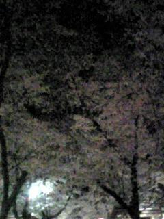 20070409.jpg