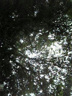 20080515-003.jpg