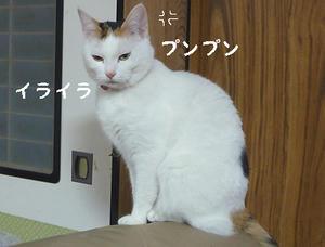 shoyu6.jpg