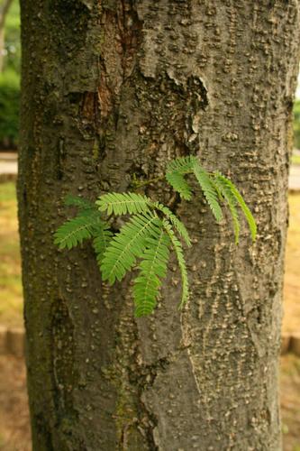 木の上の葉 2