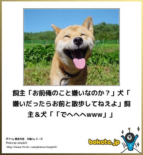 bokete】かわいい犬のおもしろボケて画像まとめ! , NAVER まとめ