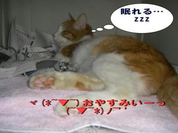 おやすみ タンタン