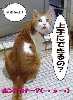 オッケー★⌒c( ̄▽ ̄)マカシトキィ!