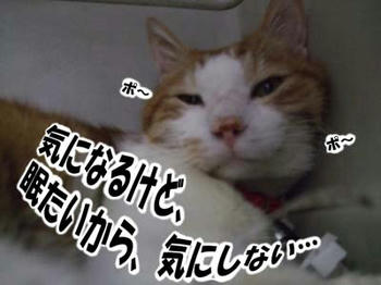 寝むた~い~(゚ρヾ)ゴシゴシ