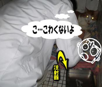大丈夫(*`д´)b OK!