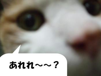 わかった?(⌒-⌒)ニコニコ...