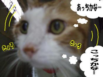 誰だろう…(・・∂) アレ?