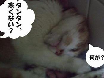 平気だよ!v('▽^*)ォッヶー♪