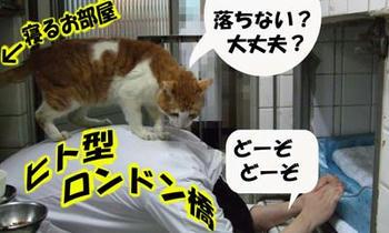 橋係ヾ(=^▽^=)ノ