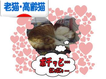 o(*^▽^*)o~♪ワーイ!!アリガトデスー!!