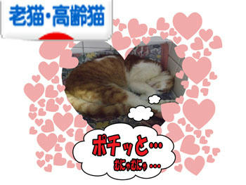 http://cat.blogmura.com/cat_senior/