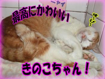 オヤスミ♪<(゚ー^)ノ^*・'゚☆。.:*: