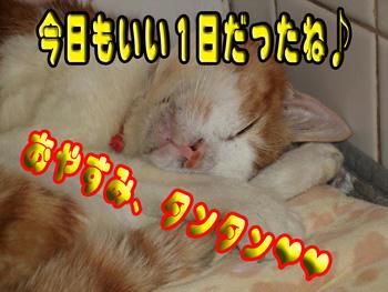 明日もきっと・・・(^^)ニコ